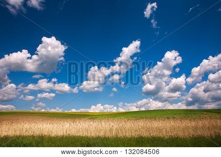 Country landscape of the field under the blue sky