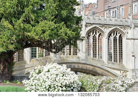 Bridge of sighs with white flowers in foreground