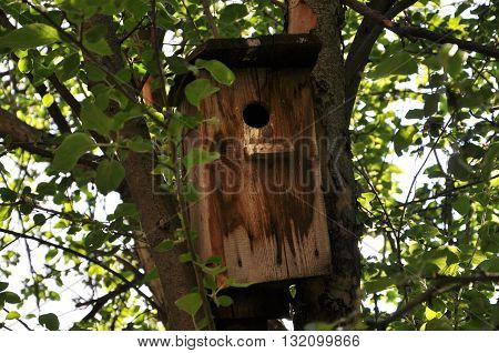 old birdhouse on the tree in foliage