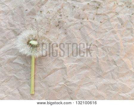 Dandelion blowball on the brown crumpled paper