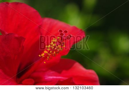 flower on a green background
