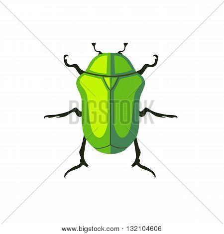 Protaetia may bug insect design flat. Small insect chafer with black legs and antennae and bright green wings folding in the shell. Wildlife creating isolation on white background. Vector illustration poster