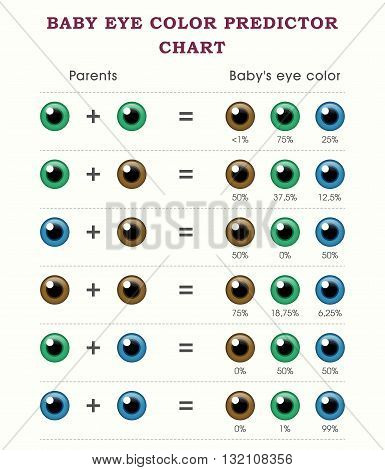 Baby eye color predictor chart template design