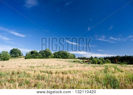 Summer Landscape in Thuringia with field and country house