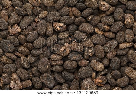 Organic dry Babchi Seeds (Psoralea corylifolia). Macro close up background texture. Top view.