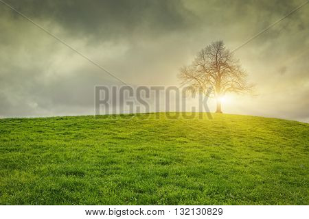 Dramatic sky and sunrise over old lonely tree - Lonely tree