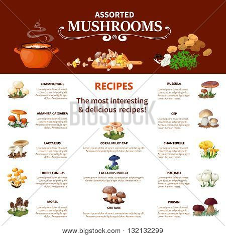 Assorted  mushrooms infographics flat layout with visual information about different edible species and most interesting and delicious recipes vector illustration