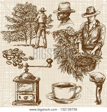 Coffee farmer picking red coffee beans on coffee tree.