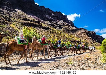 FATAGA,GRAN CANARIA, SPAIN - MAY 17. 2016: Tourists ride on camels being guided by local people through the famous Fataga canyon on Gran Canaria, Spain on May 17, 2016.