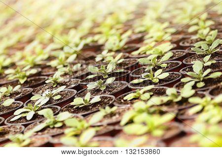 the spring plants seedlings under the sunlight