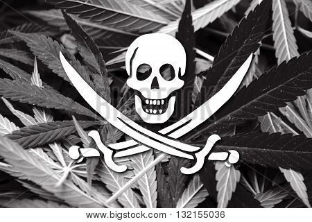 Calico Jack Pirate Flag, On Cannabis Background