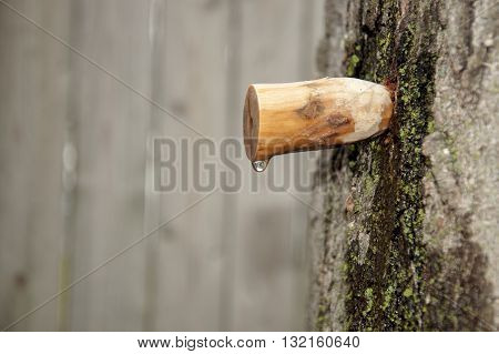 homemade carved wooden spile to tap maple tree for sap to make maple syrup poster