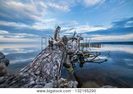 fallen tree sunset river time lapse dnipro