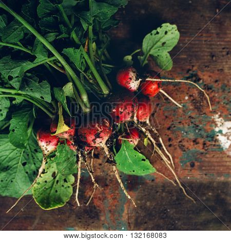 Freshly picked organic red radishes on wooden table soil dirt on vegetables selective focus