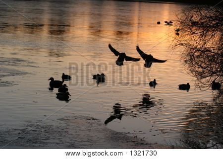 """"""" ducks on a lake at sunset """" poster"""