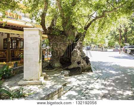 FODELE, CRETE - MAY 17: Old Plane tree in the village of Fodele in Crete at May 17, 2016