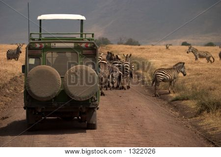 Wild Animal In Africa, Serengeti National Park