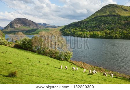 Spring landscape in Lake District National Park.   A typical Lake District scene. Lake District National Park, Cumbria, England, UK.