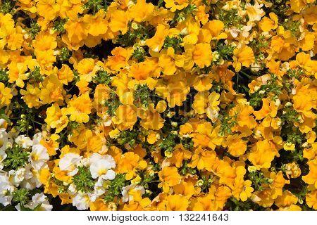Closeup Of Vibrant Blossoms.