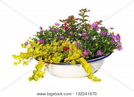 Australian Daisy And Other Garden Plants In A Old Wasching Bowl.