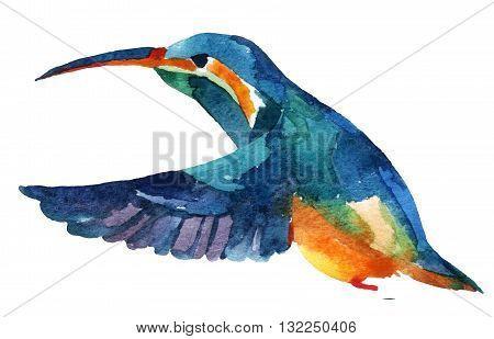 Watercolor rufous hummingbird in flight isolated on white background
