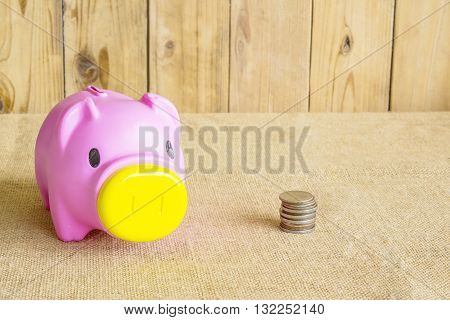 Pig piggy bank made of pink plastic and coin.