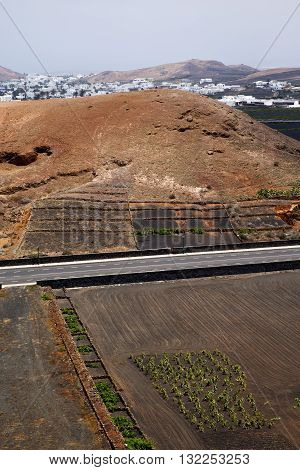 Street  Home Viticulture  Winery Lanzarote Spain