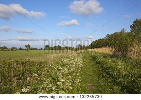 Canal Towpath With Wildflowers