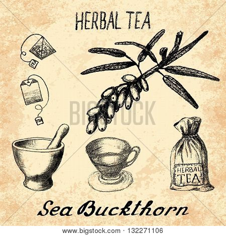 Sea buckthorn herbal tea. Set of vector elements on the basis hand pencil drawings. Sea buckthorn tea bag mortar and pestle textile bag cup. For labeling packaging printed products