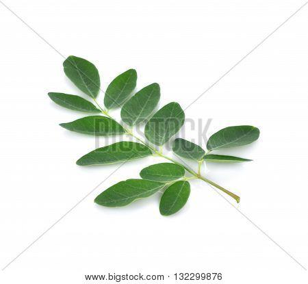 Moringa leaves over white background leaf green