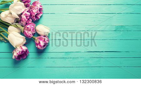 Violet and white tulips flowers on bright turquoise wooden background. Selective focus. Place for text. Flat lay still life. Toned image.