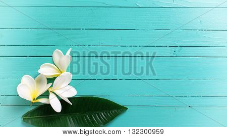 White tropical plumeria flowers on turquoise wooden background. Selective focos. Place for text. Flat lay. Toned image.