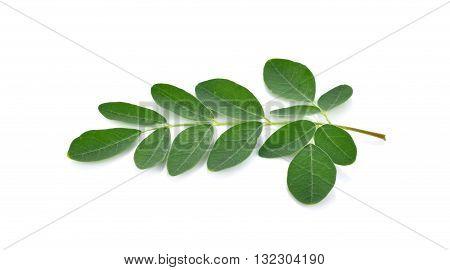 Moringa leaves over white background leaf food