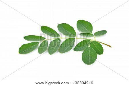 Moringa leaves on white background vegetable nature