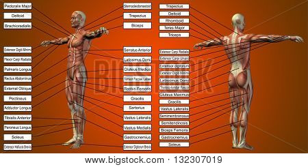 3D  illustration of a concept or conceptual human man anatomy and muscle for sport and text on red background poster