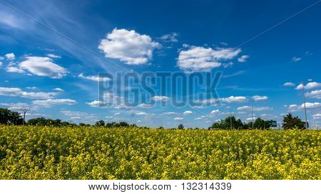 Clouds over the field of oilseed rape