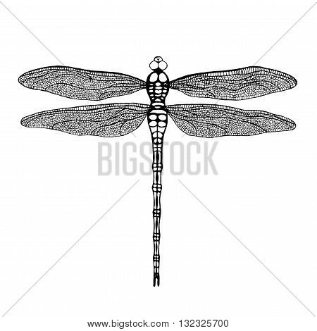 Dragonfly. Black dragonfly on white background. Hand drawn vector damselfly.