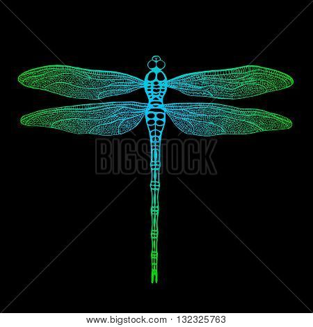 Dragonfly. Vector dragonfly. Hand drawn vector damselfly.