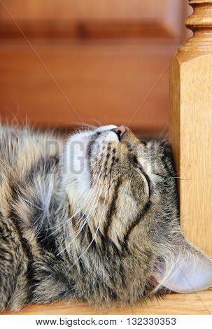 sleeping striped cat or kitten indoors. photo.
