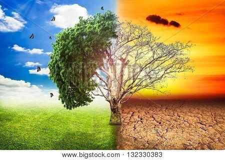Environmental concepts Live and dead big tree.