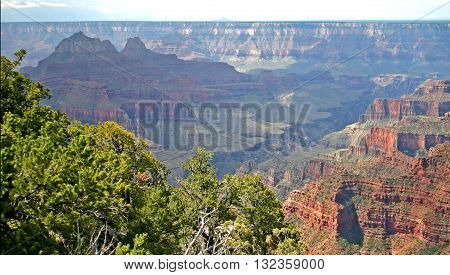 a view of the Grand Canyon in Arizona from the north rim