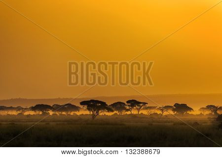 Landscape at sunset in Kenya Africa. The photograph has been taken in Masai Mara National Reserve Kenya. It's sunset time. Trees at african savanna. There are some umbrella trees foreground. Group of trees at the background. Color of photo is orange.