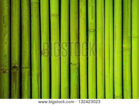 Green bamboo fence texture, bamboo background, texture background, bamboo texture