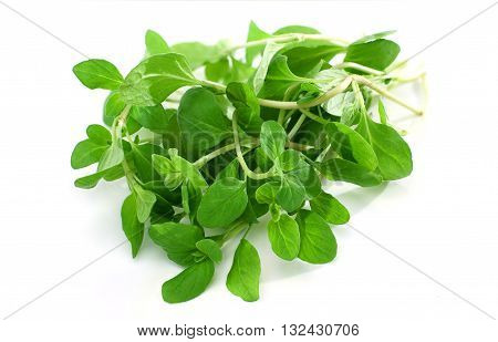 Bunch of fresh marjoram isolated on white background