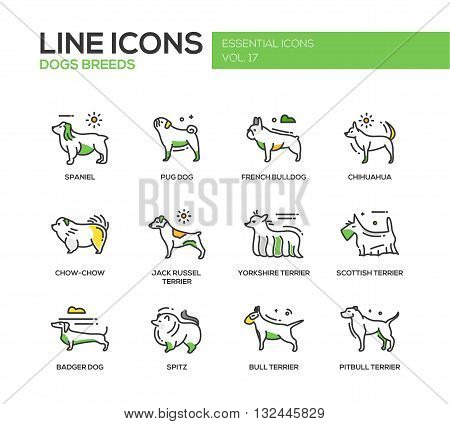 Set of modern vector line design icons and pictograms of domestic dogs breeds. Spaniel, french bulldog, chihuahua, chow-chow, jack russel terrier, yorkshire, scottish terrier, badger, spitz, pitbull