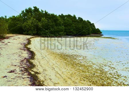 Rural sandy beach surrounded by tropical plants taken in the Florida Keys, FL