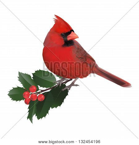 Northern Cardinal. Hand drawn vector illustration of a male Northern cardinal and a holly twig.Transparent background, realistic representation.
