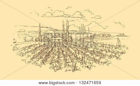 Vector hand drawn rural landscape. Wine label design.