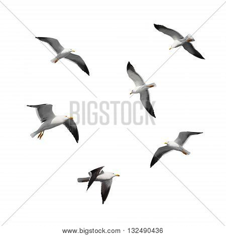 Set Of Big Flying Seagulls Isolated On White