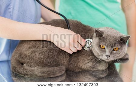 medicine, pet, animals, health care and people concept - close up of veterinarian doctor with stethoscope checking british cat up at vet clinic